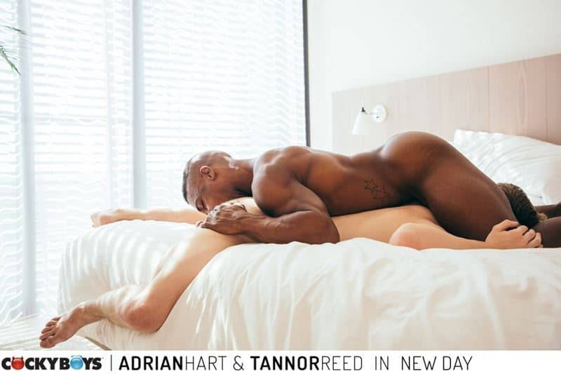 Sexy ripped black muscle stud Adrian Hart huge cock bareback fucking young dude Tannor Reed tight boy ass 021 gay porn pics - Sexy ripped black muscle stud Adrian Hart's huge cock bareback fucking young dude Tannor Reed's tight boy ass